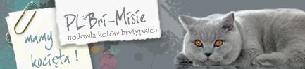 Hodowla Kotów Brytyjskich Bri-Misie*Pl